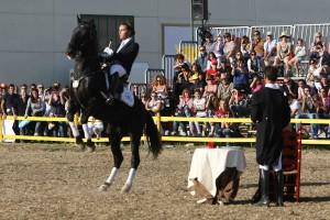 mostra-cavallo-2