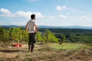 Vineyard, farmer, looking away, valley