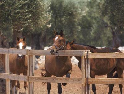 cavallo2-maneggio-delle-rose-torre-ado-morciano-400-302