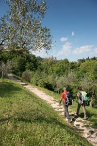 Via di Francesco - Assisi - Bosco del FAI