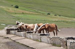 cavalli-castelluccio-1